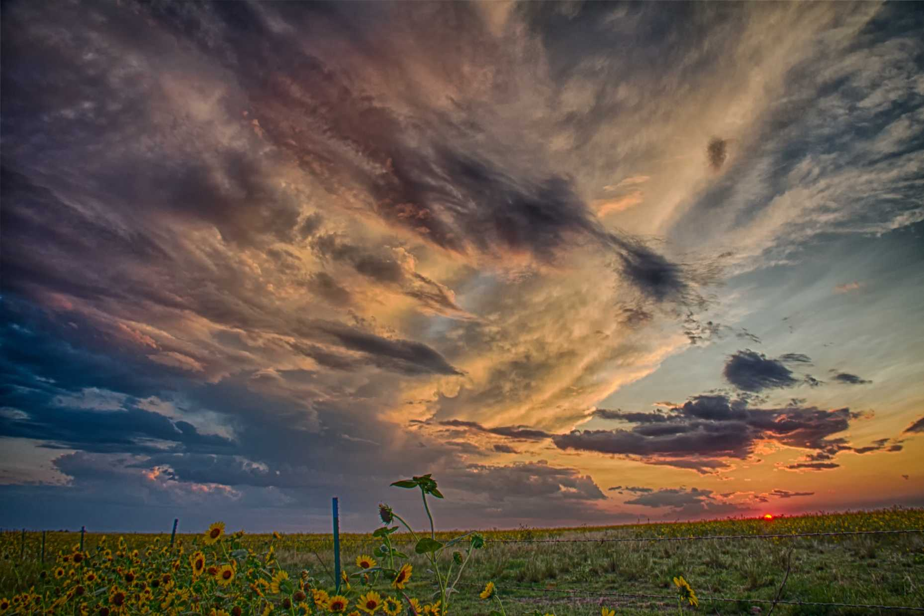 Sunset_Sunflowers 2 RS